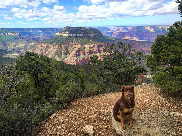The North Rim of the Kaibab Plateau in the Grand Canyon